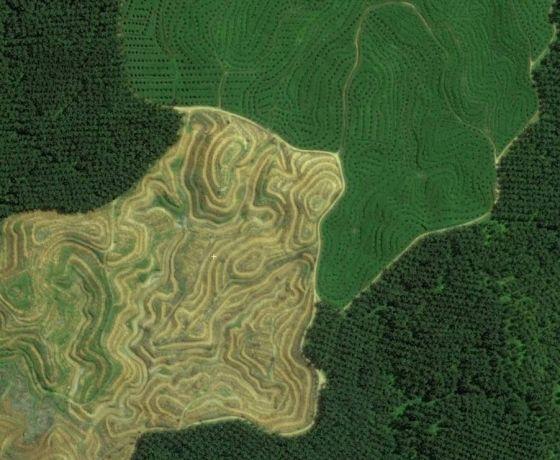 Perkebunan Kelapa Sawit di Sumatera (Image Copyright : DigitalGlobe)